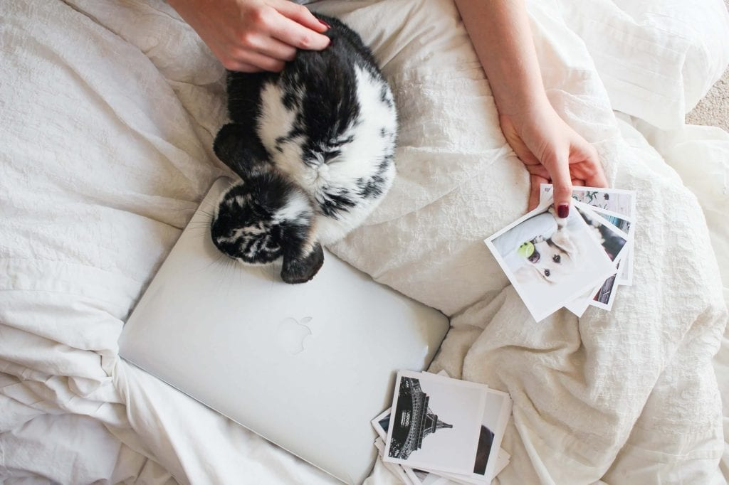 Black and White bunny on white bed with laptop and photographs - www.Everythingabode.com