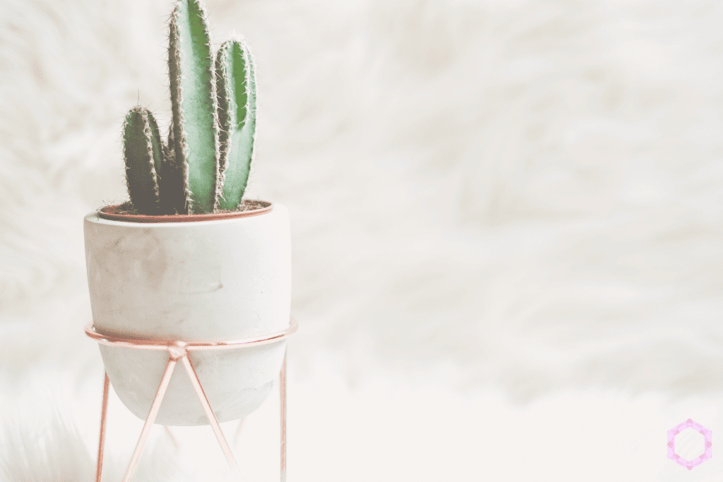 8 Fool-Proof Ways to Get FAMOUS on Instagram! www.Everythingabode.com #Instagramstar #Instagramtips #socialmediafame #socialmedia #Instafame #Instafamous #marketing #succulents #plants