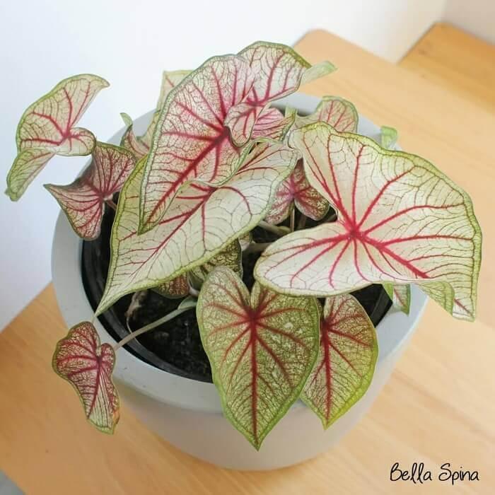 Remember plant colors