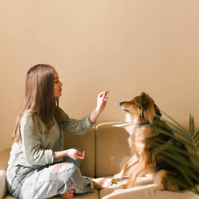 Self care home ideas - Pet or cuddle an animal or play with your pet. dog-home-training-lessons-pet