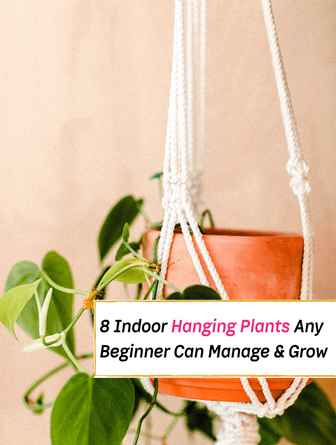 The Best 8 Indoor Hanging Plants Any Beginner Can Easily Manage - Everything Abode