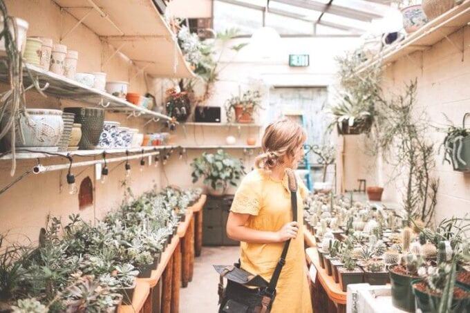 hanging plants, hanging indoor plant, indoor hanging plants, hanging succulent plants, best hanging plant, plants for hanging