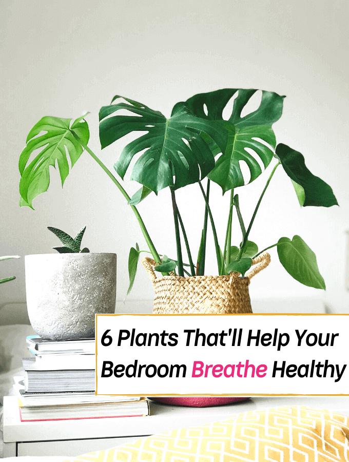 6 Plants That'll Help Your Bedroom Breathe Healthy -- Everything Abode