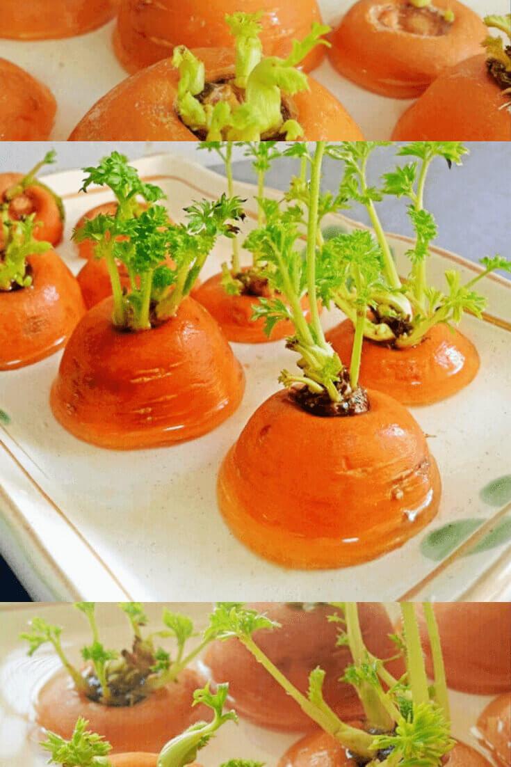 regrow carrot greens, regrow kitchen food, carrots in water on window to regrow