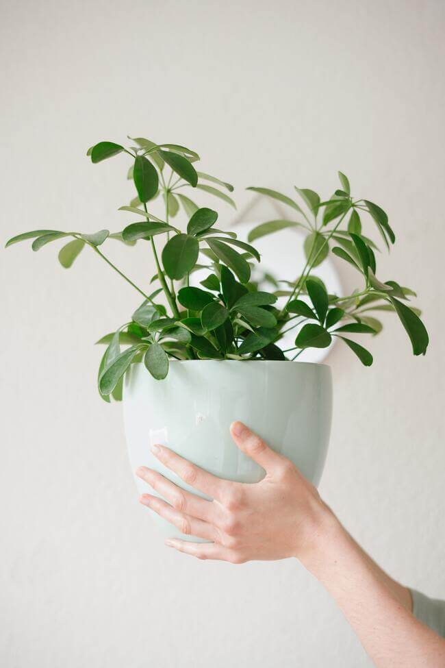 More exposure to Nature and plants.wellness trends - Everything Abode