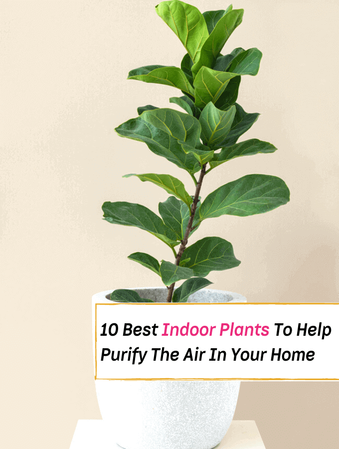10 Best Indoor Plants That'll Help Purify The Air In Your Home - Everything Abode