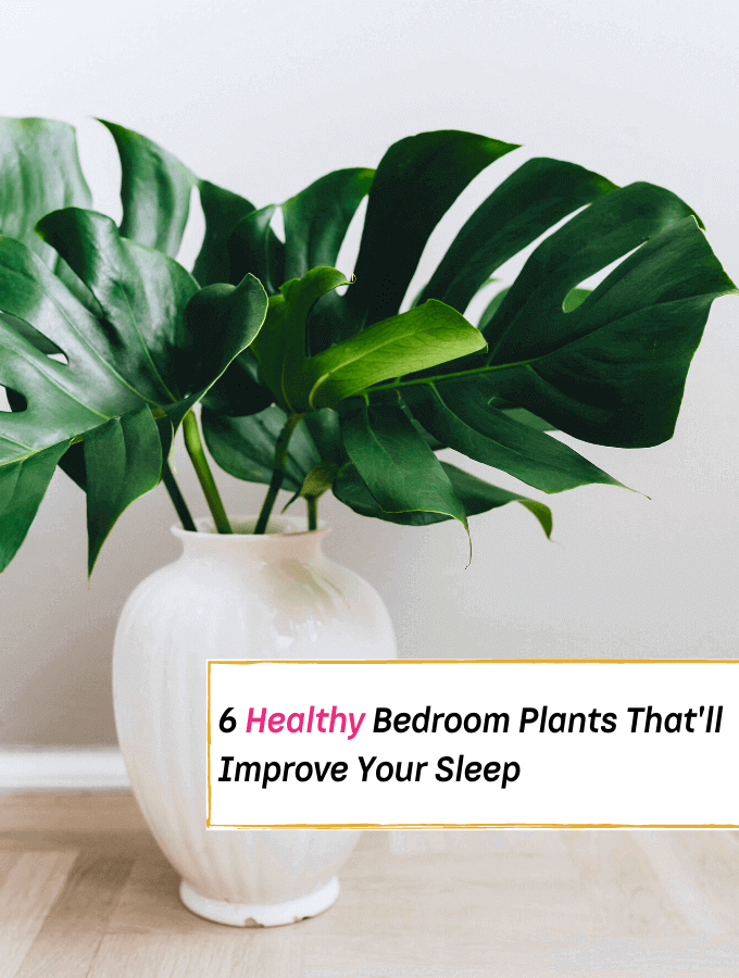 6 Healthy Bedroom Plants That'll Improve Your Sleep -- Everything Abode