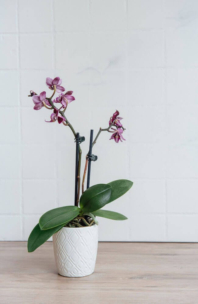 Orchids arte perfect house plants for the bathroom - bathroom plants - Everything Abode