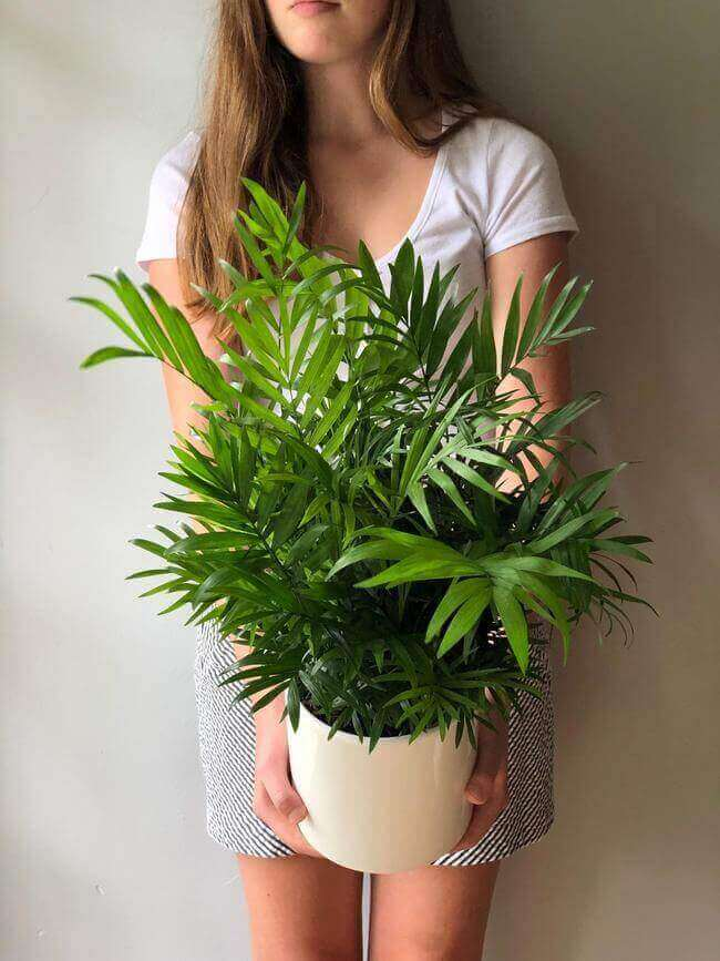Palm Plants great for the bathroom in a sunny spot - Everything Abode
