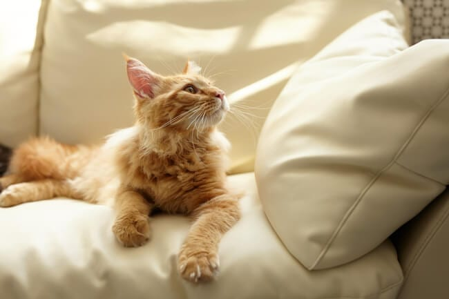 9 Easy Ways to Make Your House More Pet-Friendly - review your furniture
