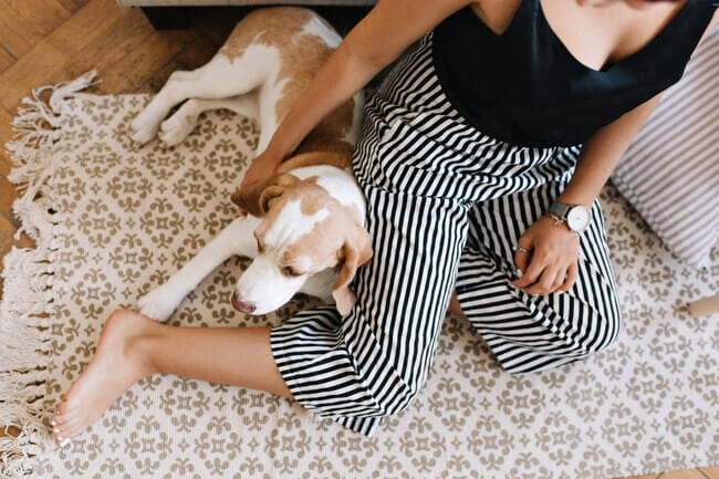 Easy Ways to Make Your House More Pet-Friendly - reduce noise