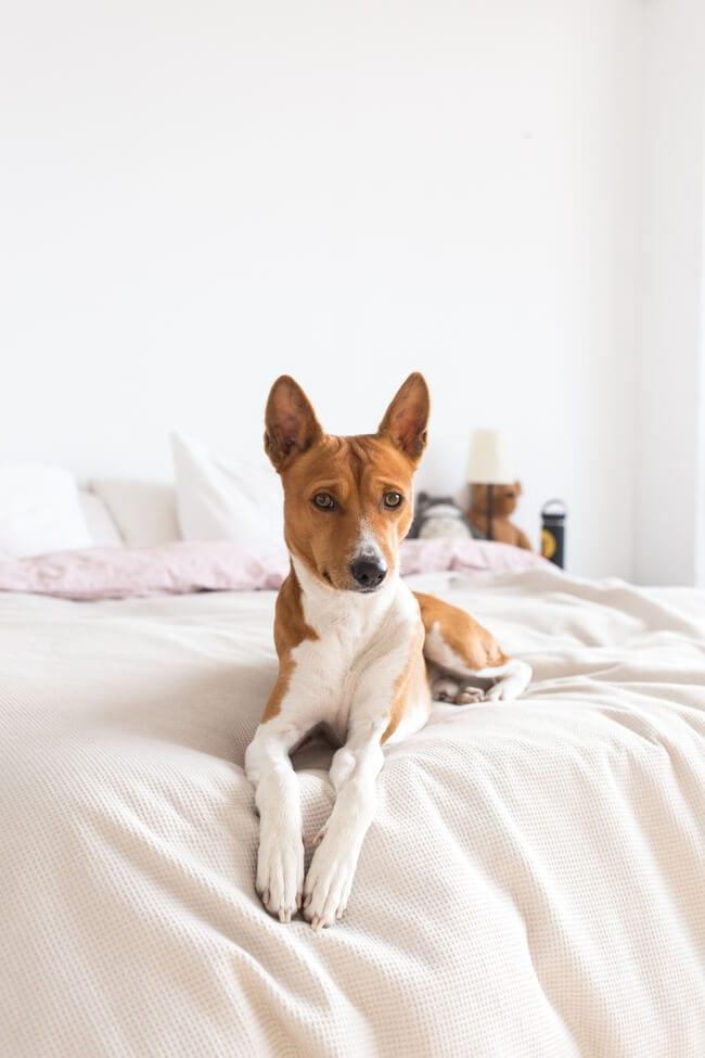 pet friendly rugs, sofa pet friendly, pet friendly houseplants