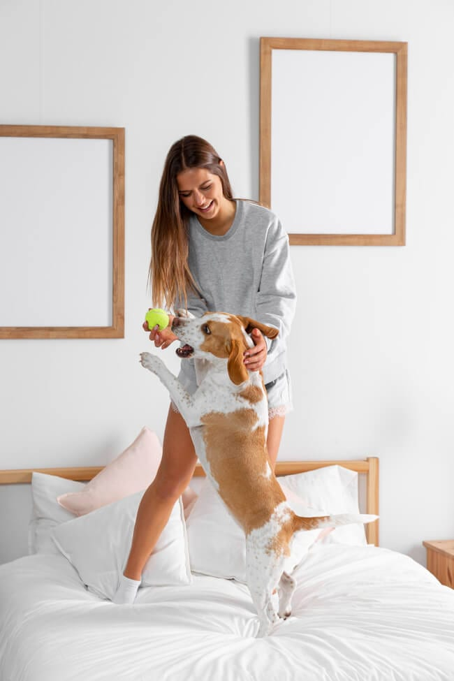Store away toys to make your home more pet friendly