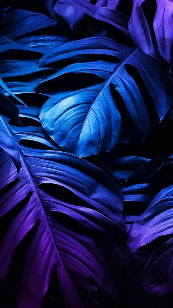 Neon leaf mobile screen wallpaper, dark black blue wallpaper, leaves wallpaper
