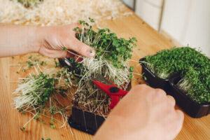 indoor winter hobbies, popular fun indoor hobbies - gardening