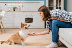 pet training as a unique indoor winter hobbies