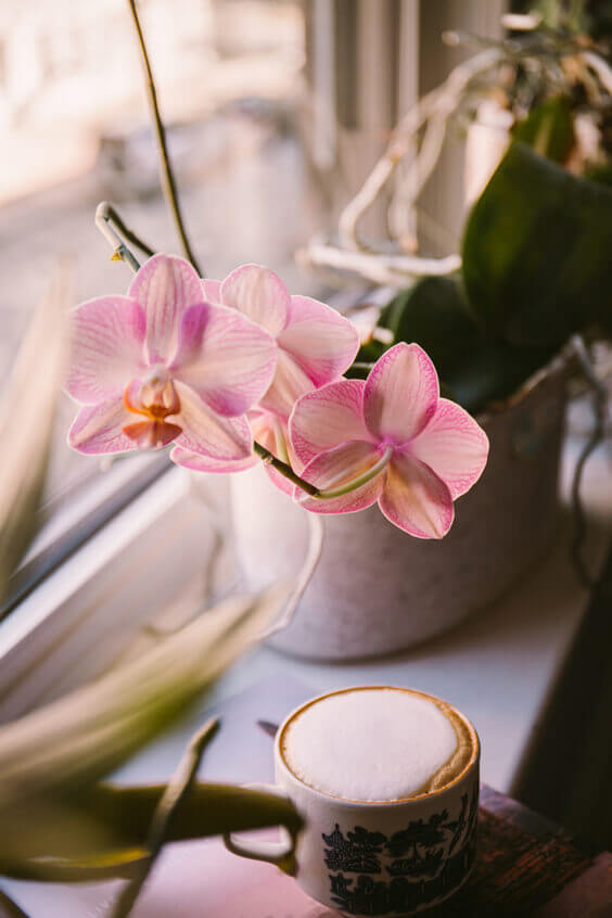 place fresh flowers in your home to make it smell fresh like spring