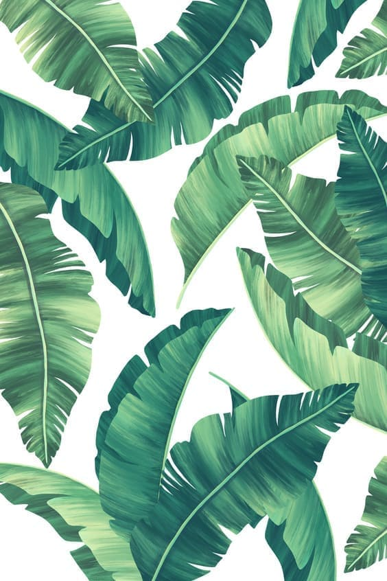 tropical wallpapers, tropical backgrounds, mobile tropical wallpaper, iphone tropical images, tropical wallpaper for iphone background,
