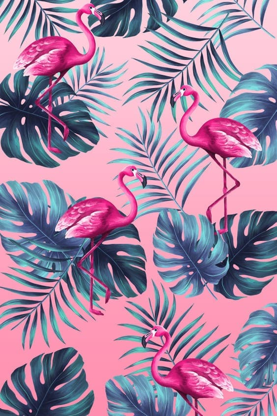 tropical wallpapers, tropical backgrounds, mobile tropical wallpaper, iphone tropical images