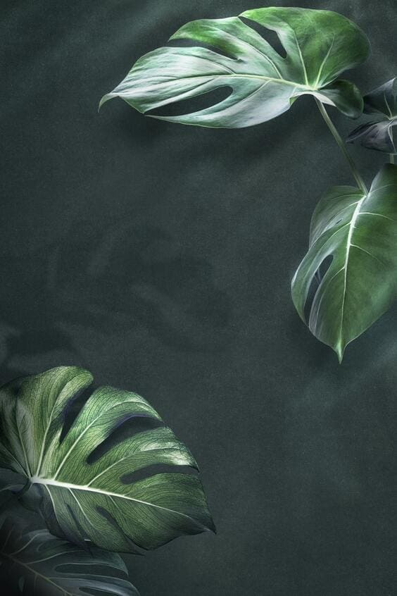 aesthetic tropical mobile background images for iphone