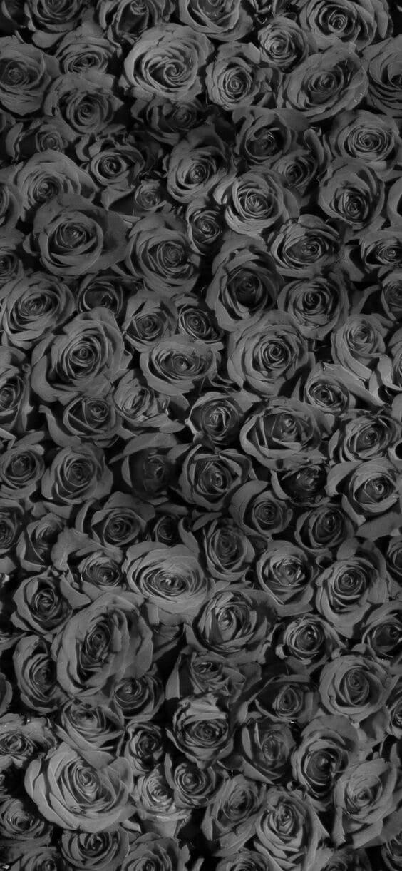 Dark bed of roses mobile wallpaper
