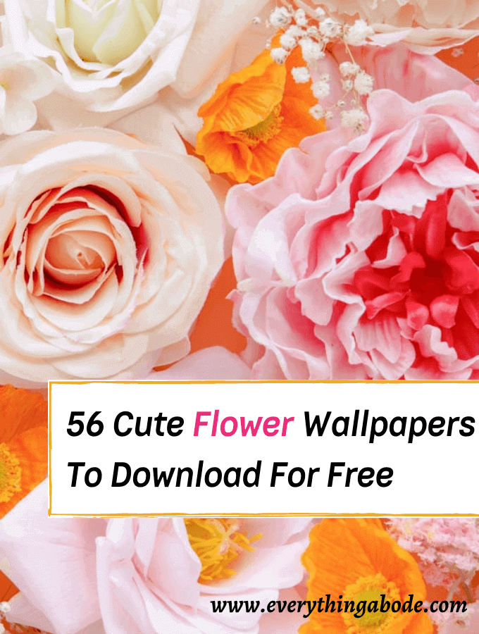 flower iphone wallpapers, flower backgrounds for iphone, floral wallpapers